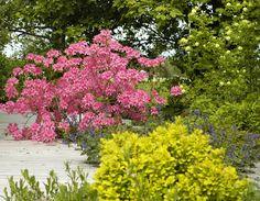 _DSC0019_edited-1 My Design, Pergola, Garden, Plants, Wordpress, Garten, Outdoor Pergola, Lawn And Garden, Gardens