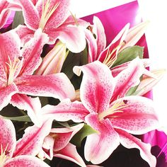 Sweetheart Lily Bouquet of flowers www.eden4flowers.co.uk