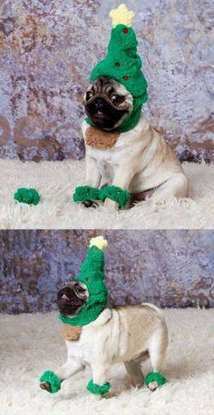 30 costumes that prove pugs always win at halloween.
