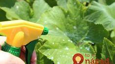 Napadla vaše uhorky pleseň? Takto môžete úrodu zachrániť!