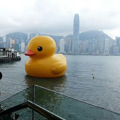 .@lol_lord12 | Yay big rubber duck in Hong Kong #swag #rubberduck | Webstagram - the best Instagram viewer