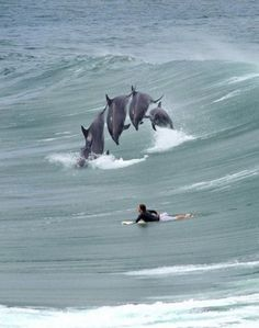 surf # dolphins