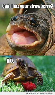 turtle memes - Google Search