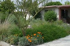 California Xeriscape Landscaping - Yahoo Image Search Results