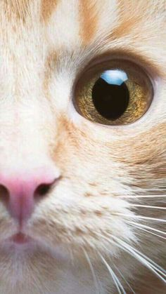 Augen der Mieze
