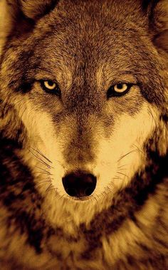 Knowledge of Great Wisdom Gifted by the Wolf Goddess and Mate. Able to be used for a variety of purposes to guide people on their Soul Life Path Journey.
