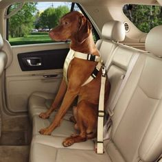 awesome Guardian Gear Ride Right Classic Car Harnesses - Sturdy Nylon Harnesses for Dogs - X-Small