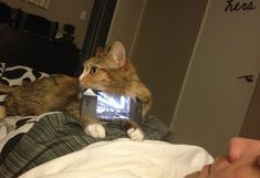 11 Photos That Prove Cats Are Way More Useful (And Cuter) Than Anything You'd Find on QVC