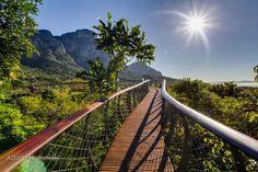 un pont au dessus de la canopée de Kirstenbosch  2Tout2Rien