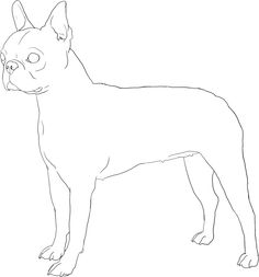 Boston Terrier Lineart by DoggieDoodles
