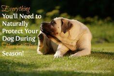 Naturally Protect Your Dog During Flea & Tick Season