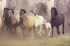 Running Horses Photograph - Wild Horses Running by John Foxx