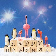 Happy new year! #aflamingoaday #happynewyear #flamingo #2017 #newyearseve #love #family #holiday #newyear #flamingos