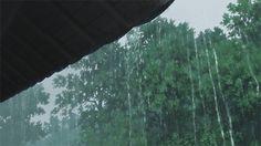 Rain, *u*.