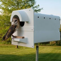 The designer of The Barn Owl Box has seen barn owls breeding successfully in nest boxes four feet off the ground. The best rule of thumb is ...