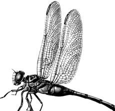 Today I'm sharing thisVintage Dragonfly Image! Shown above is a black and white Graphic of a Dragonfly with lovely delicate Wings. A wonderful old Natural History Image to use in your Craft or Collage Projects! Have you joined our Premium Membership Site yet? For one low monthly price (or save even more with our...Read More »