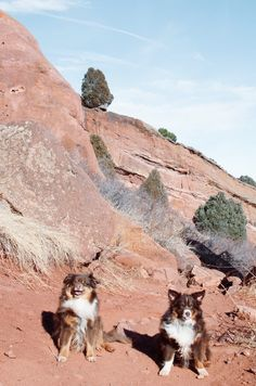 hiking in the red rocks with dingus number one and dingus number two | stella maria baer