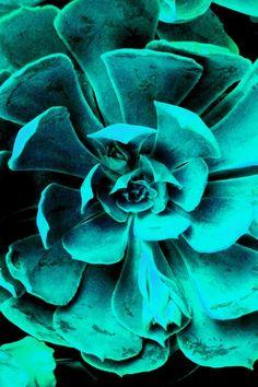 Teal / Aquamarine Bloom