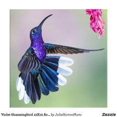Shop Purple Hummingbird Beautiful Acrylic Print created by JulieHortonPhoto. Hummingbird Pictures, Acrylic Wall Art, Hummingbirds, Decoupage, Art Gallery, Wings, Purple, Inspiration, Animals