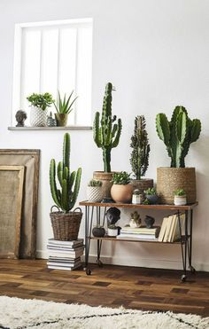 Plant Stand Design Ideas for Indoor Houseplants - Page 3 of 67 - LoveIn Home indoor plants; Cactus House Plants, House Plants Decor, Cactus Decor, Cacti, Cactus Cactus, Pots For Plants, Types Of Cactus Plants, Cactus Centerpiece, Decoration Plante