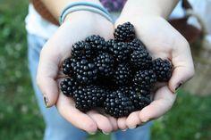 Zimmerman's Berry Farm