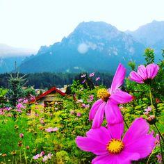 Busteni - Valea Alba