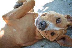 Hey! What's up? My World, Pitbulls, Dog Cat, Cats, Animals, Gatos, Animales, Pit Bulls, Kitty Cats