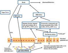 Autism targeting gut microbiome. studies show alterations in  composition of fecal flora & metabolic products of the gut microbiome in ASD. The gut microbiota influences brain development & behaviors through neuroendocrine, neuroimmune & autonomic nervous systems.