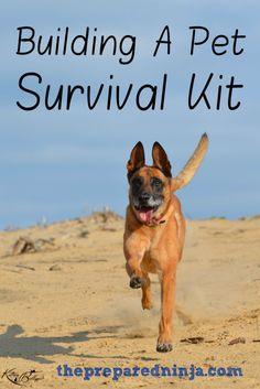 BUILDING A PET SURVIVAL KIT
