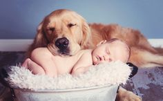 Dogs and Babies Have More in Common Than We Think