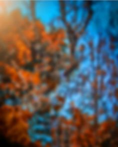 Image may contain: plant, tree, sky, outdoor and nature Blur Background In Photoshop, Desktop Background Pictures, Studio Background Images, Background Images For Editing, Light Background Images, Picsart Background, Best Hd Background, Photo Background Editor, Photography Studio Background
