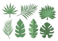 Palmeira Tropical livre Leaves Vector