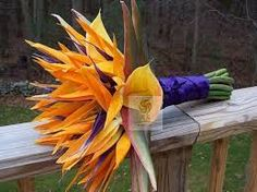 Image result for flower arranging with strelitzia