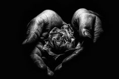 Aesthetics of Aging - A withered rose in the hands of an elderly woman. The dried rose petal is held in the light. A play of light and shadow. Emblematic of the aesthetics of aging and mortality. Black white fine art photography. #blackwhite #photography #fine art