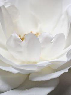 White Flower by Gudrun Arndt