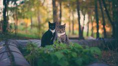 ✳ I found a park with cats - new photo at Avopix.com    ▶ https://avopix.com/photo/25704-i-found-a-park-with-cats    #theme-cats #cat #cats #animal #feline #avopix #free #photos #public #domain