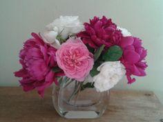 "Peonías, rosas ""Gertrude Jekyll"" y ""Winchester Cathedral"""