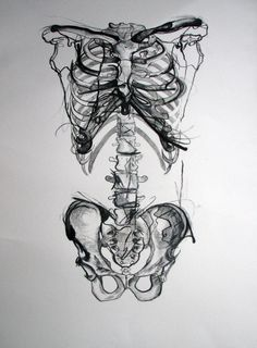 Ribs, Spine, & Pelvis