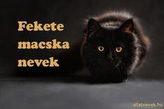 Fekete macska nevek - Állatnevek Mephisto, Batman, Movie Posters, Movies, Dominatrix, Films, Film Poster, Popcorn Posters, Cinema