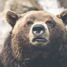 The big bad bear :)