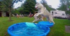 Traga os Huskies, a piscina infantil e vamos fazer a melhor festa de todas