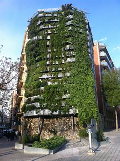 Mitgera verda. Barcelona | Verdalis