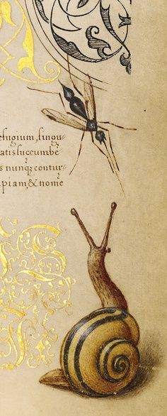 """Joris Hoefnagel, Georg Bocskay """"Insects, Basil Thyme, and Land Snails (detail)"""""""