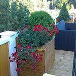 Frodig vekst i isolerte blomsterkasser fra Blomsterkasseriet.