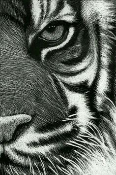 scratchboard tigre by Roman-Novikov on deviantART - Tiere - Animals Pencil Art Drawings, Animal Drawings, Art Sketches, Kratz Kunst, Regard Animal, Black Paper Drawing, Scratchboard Art, Scratch Art, Tiger Art