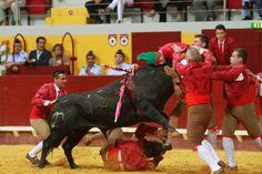 Bullfight in Portugal - Redondo Arena