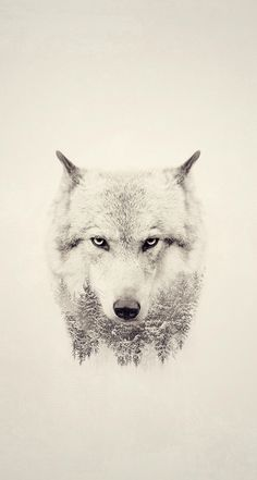 Wolf Whiteout.... May 2016 Latest Screen Savers #15