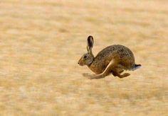 заяц прыжок - Поиск в Google