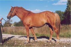 Colourful Estonian « Picture Gallery « Estonian Native Horse