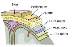this post shows the layers of the meninges: Dura matter, arachnoid and pia matter.